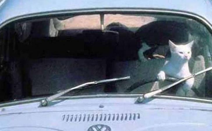 En voiture avec mon chat : comment voyager sereinement et en scurit
